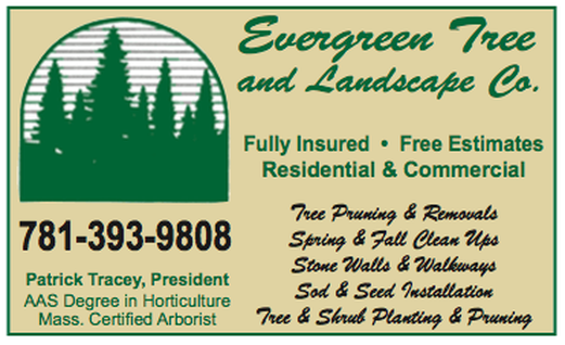 Cost of Tree Removal in Massachusetts